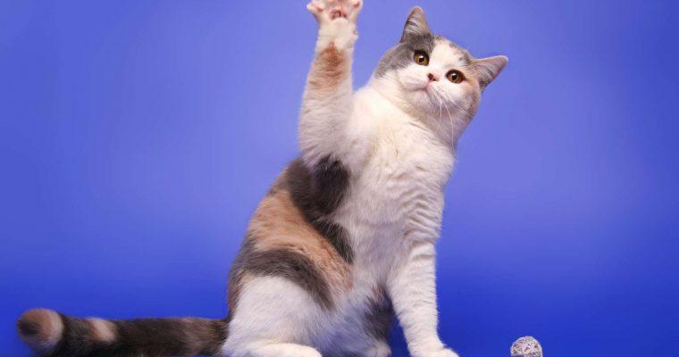 Que pensez-vous noter sur votre médaille pour chat?